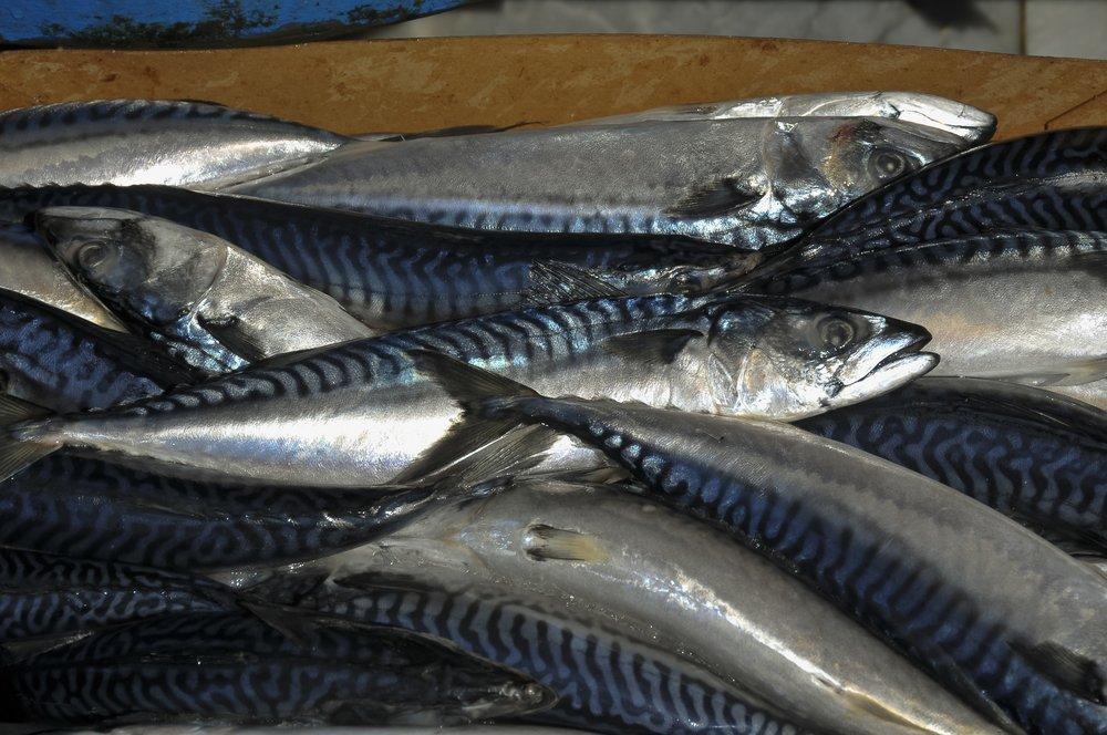 Как не заразиться червями из рыбы
